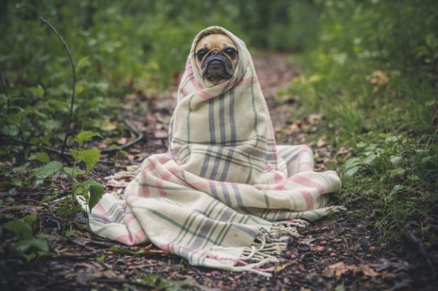 assicurazione cane